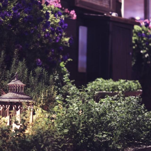 """""""lantern in a garden"""" stock image"""