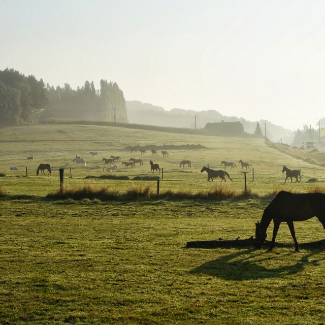 """Horses in meadow"" stock image"