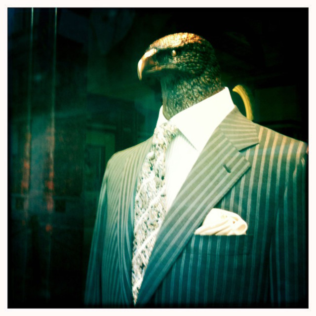 """hawk wearing business suit"" stock image"