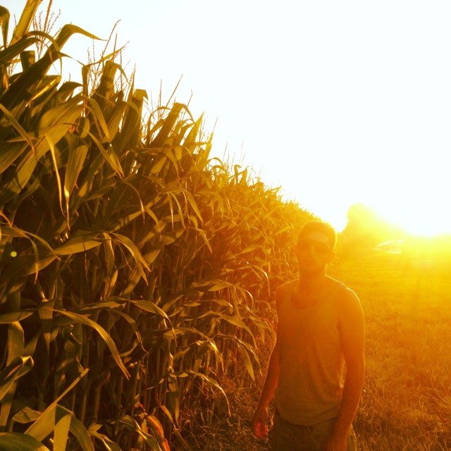 """Corn at sunset"" stock image"