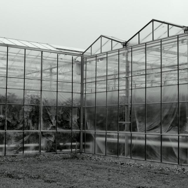 """""""Greenhouses"""" stock image"""