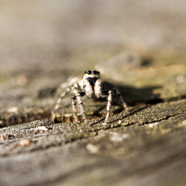"""""""Eyes of the Spider"""" stock image"""