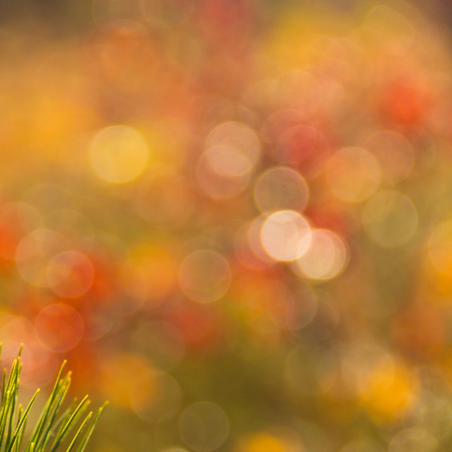 """Fall Bokeh"" stock image"
