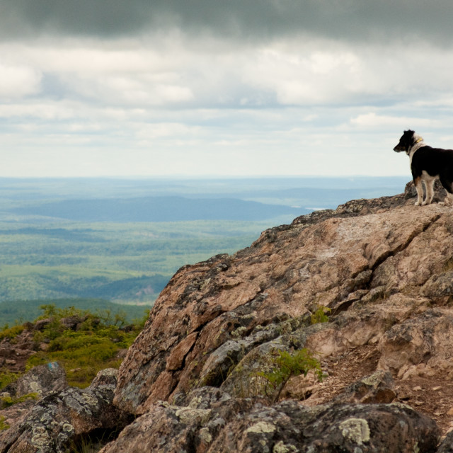 """Dog on the Mountain"" stock image"