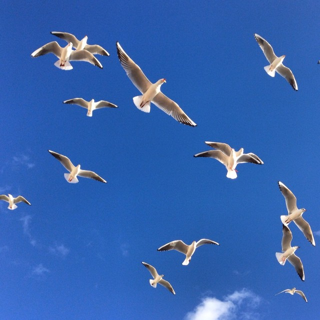 """Seagulls swarming in Southend-on-Sea"" stock image"