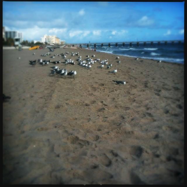 """""""Seagulls on beach"""" stock image"""