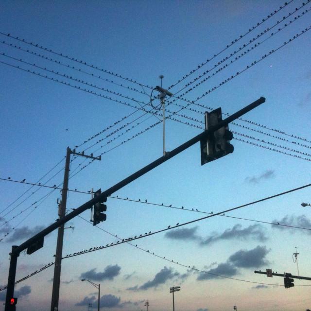 """Birds on powerlines"" stock image"