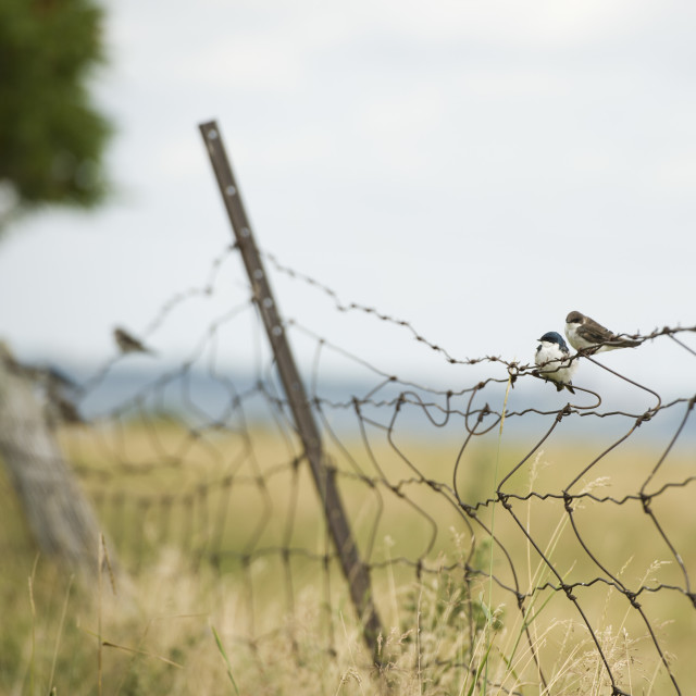 """Bird on a Wire"" stock image"