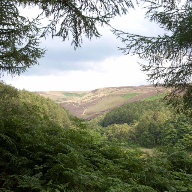 """""""Derwent Reservoir Landscape"""" stock image"""