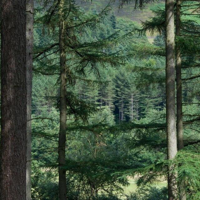 """Derwent Reservoir Trees"" stock image"