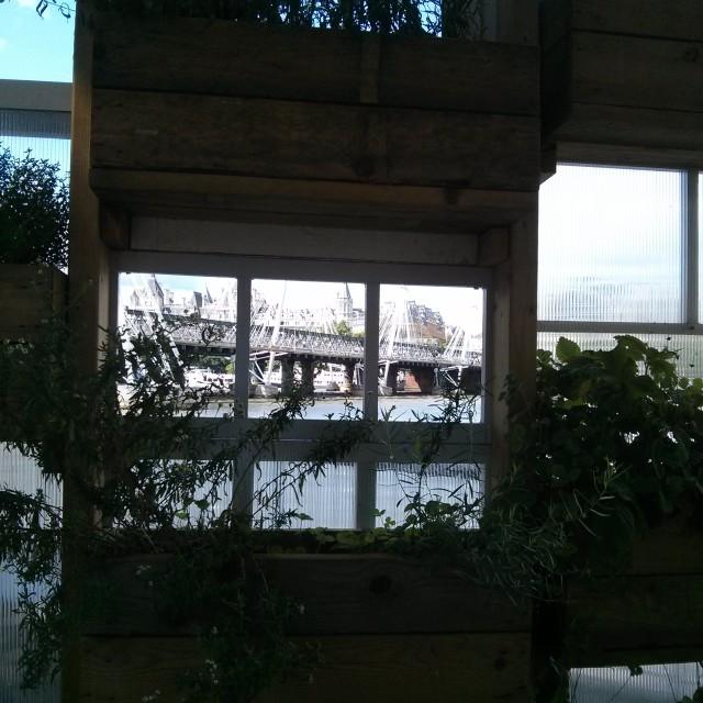 """""""Queen's Walk Window Gardens"""" stock image"""