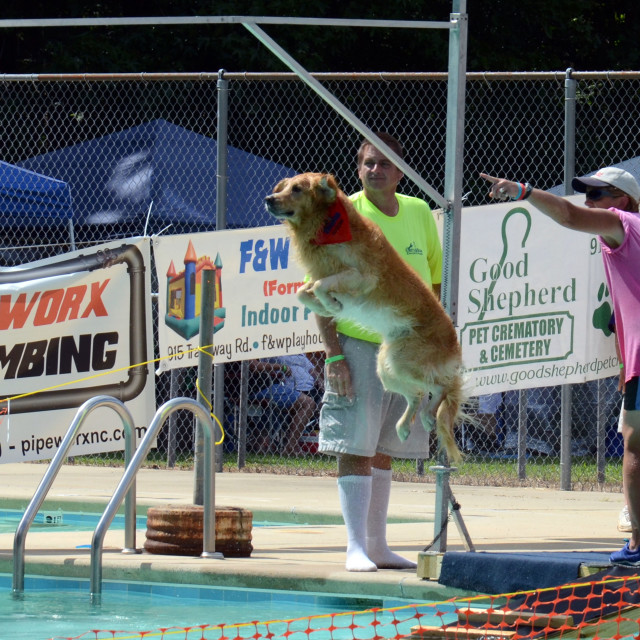 """Airborne Dog- Dock Diving Event"" stock image"