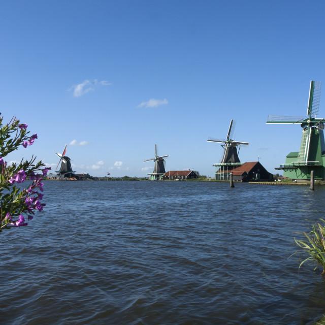 """Dutch Windmills"" stock image"