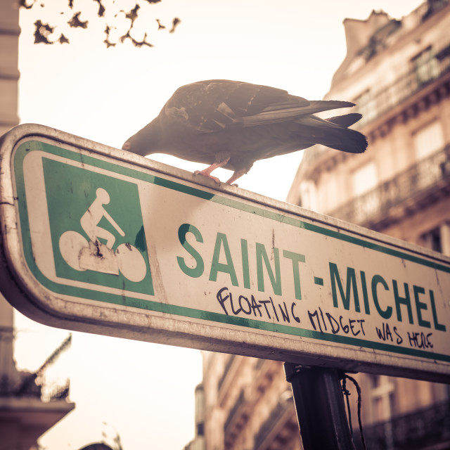 """Paris Pigeon"" stock image"