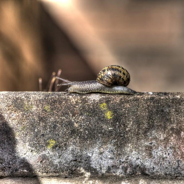 """""""Snail on a Jouney"""" stock image"""