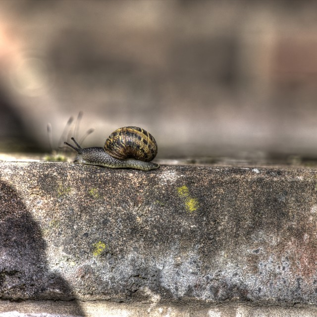 """""""Snail on Journey 2"""" stock image"""