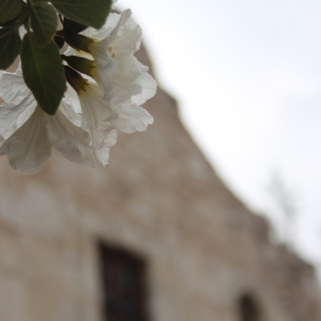 """The Alamo, Texas"" stock image"