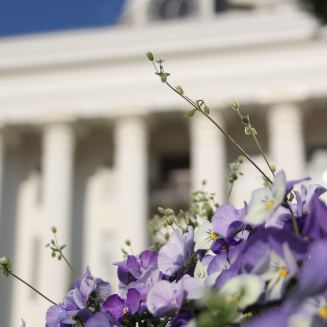 """State Capital, Montgomery AL"" stock image"