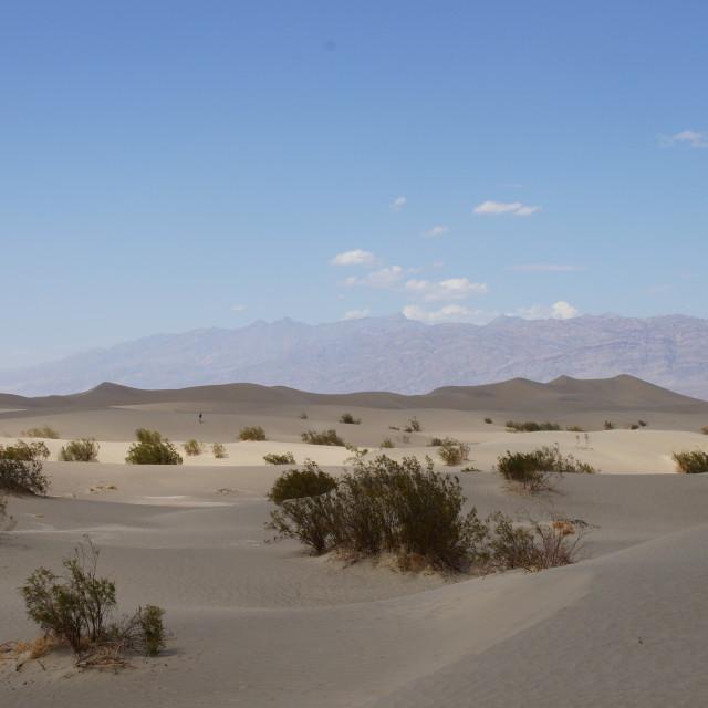 """""""When Sahara meets California"""" stock image"""