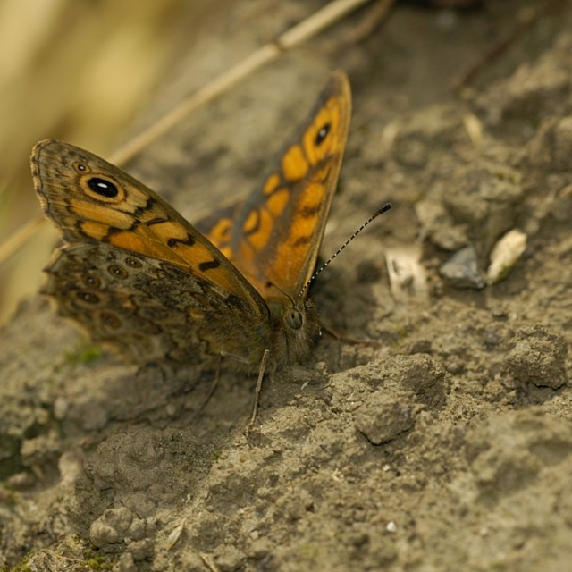 """Wall Brown"" stock image"