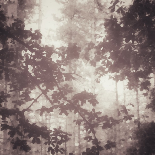 """The mist between the branches"" stock image"