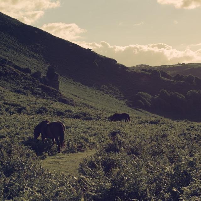 """""""Horses in Devon"""" stock image"""