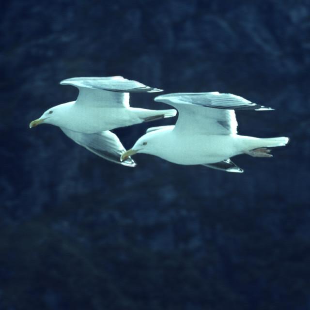 """aerobatic"" stock image"