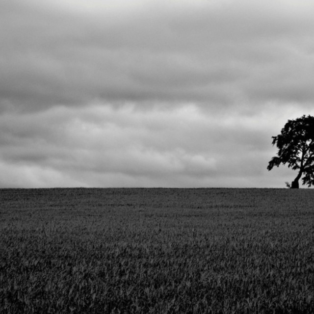 """""""The Ent - Lone Tree"""" stock image"""