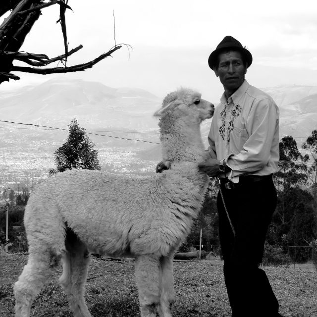 """Man and his Alpaca"" stock image"