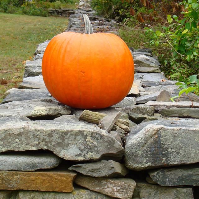 """""""Pumpkin on Peaks"""" stock image"""