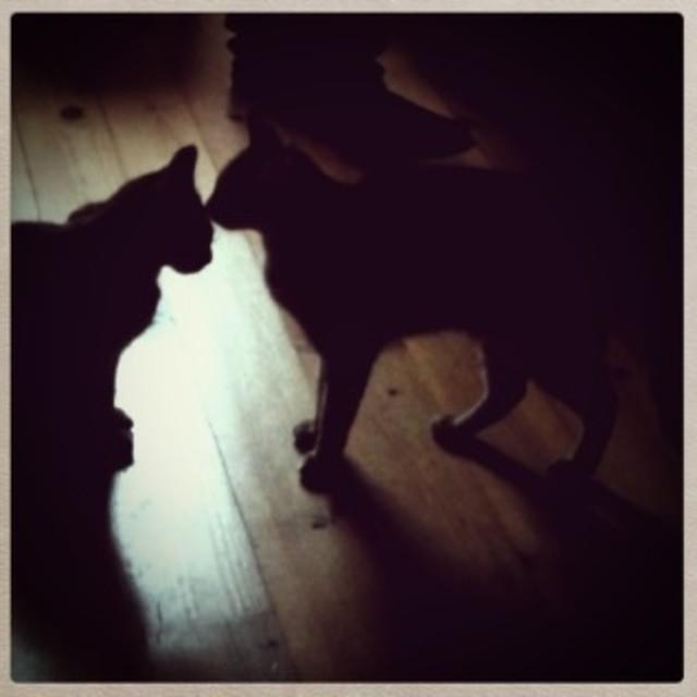 """Cat Kiss"" stock image"