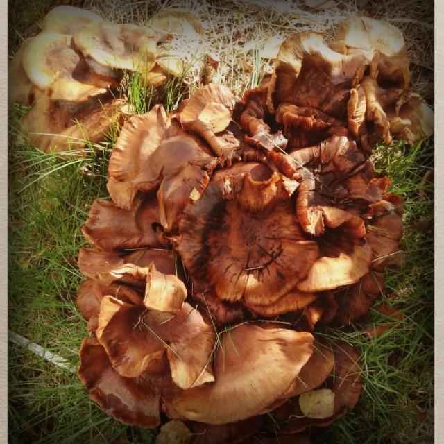 """Mushrooms!"" stock image"