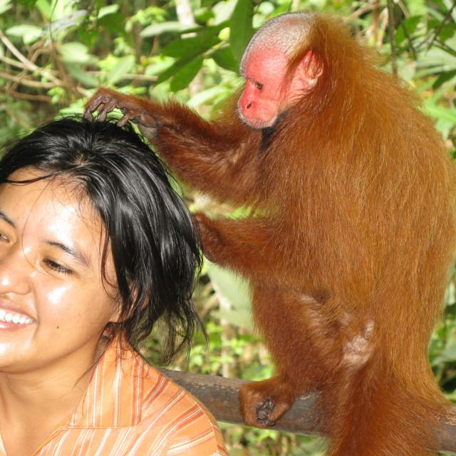 """""""Monkey grooming"""" stock image"""