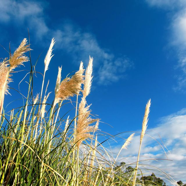 """Tall Grass"" stock image"