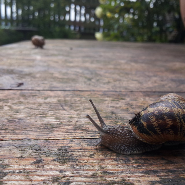 """""""Close up of a snail"""" stock image"""
