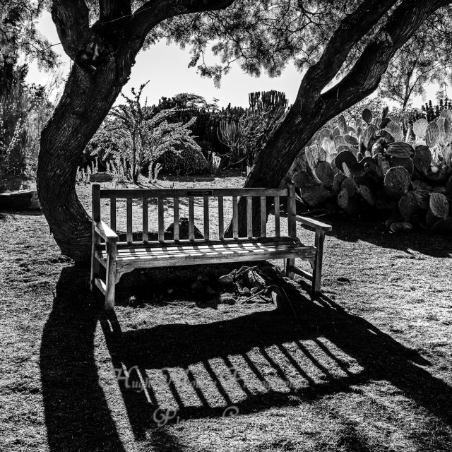 """Bench in Morning Sun"" stock image"