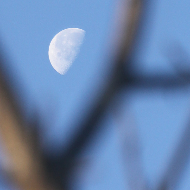 """Moon between branches"" stock image"