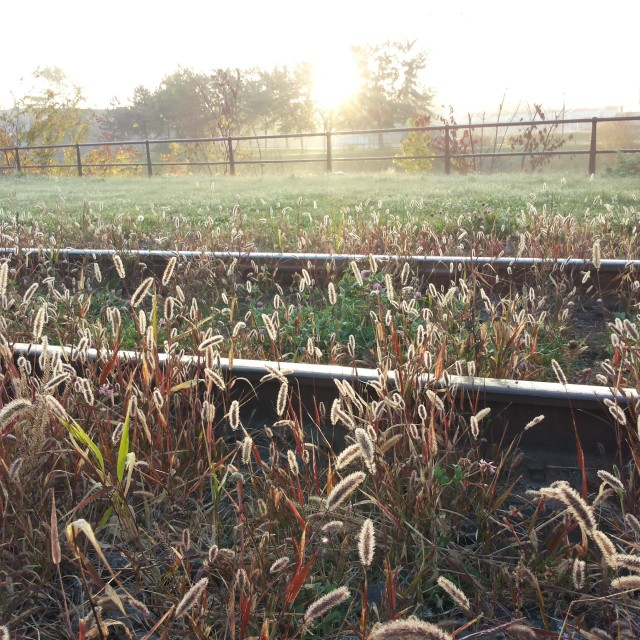 """Morning sunshine and frost"" stock image"