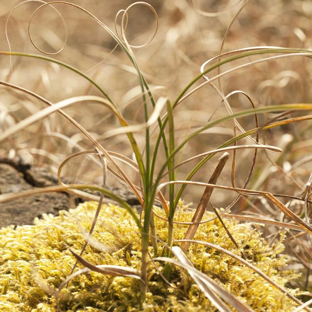 """Twirly Grass"" stock image"