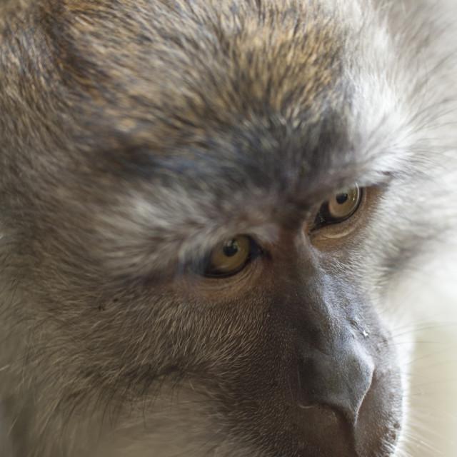 """""""Monkey face"""" stock image"""