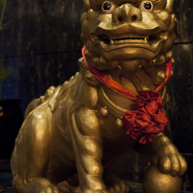 """Gold lion"" stock image"