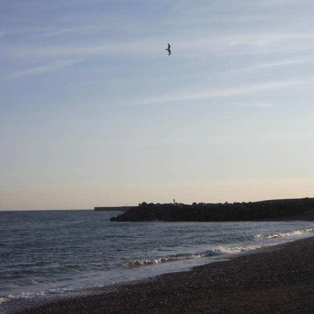 """""""Shoreham Seagull"""" stock image"""