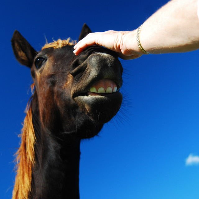 """Horse Face."" stock image"