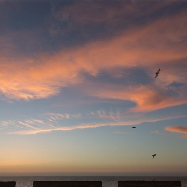"""Sunset Love Birds"" stock image"