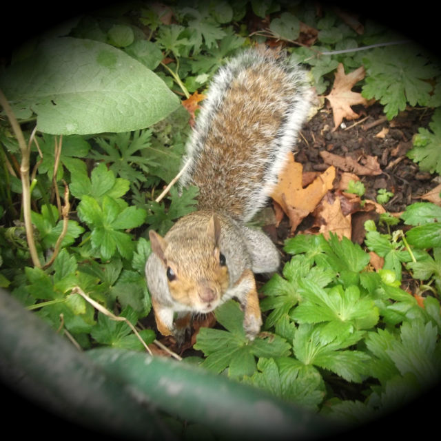 """Squirrel In The Spotlight"" stock image"