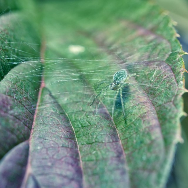 """Green spider and web"" stock image"