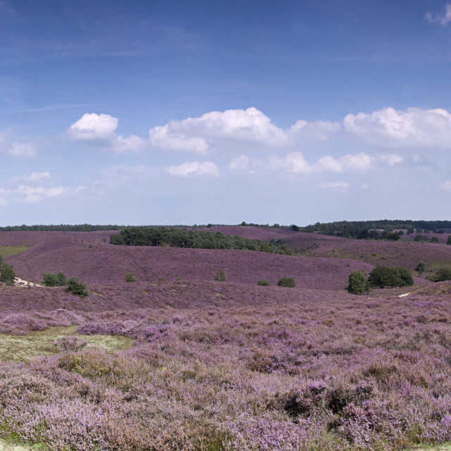 """Panoramic Land of Heath"" stock image"