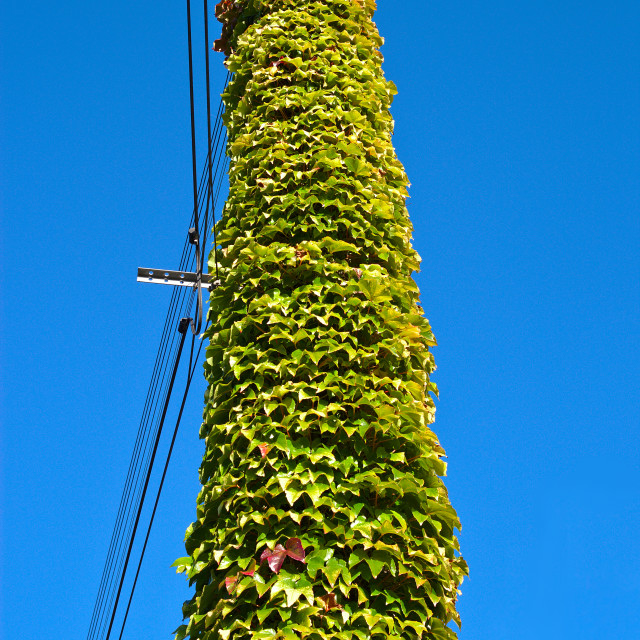 """Green leaves over a pole"" stock image"