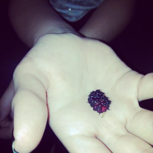 """The 1st blackberry"" stock image"