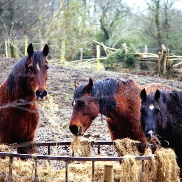 """""""Three Horses"""" stock image"""